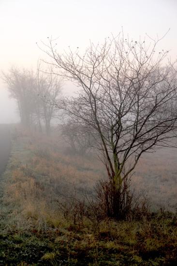 DECEMBER MORNING IN UNSTRUT VALLEY by Kadri von Hahn (c) 2015