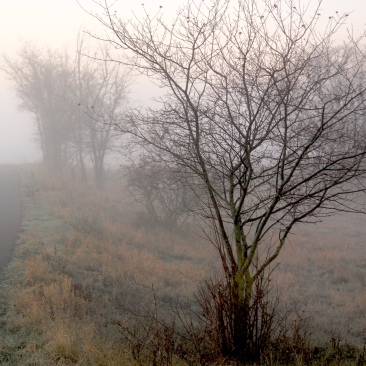 DECEMBER MORNING IN UNSTRUT VALLEY by Kadri von Hahn (c) 2015
