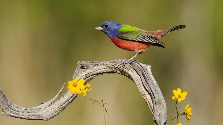 Wonderful-Bird-Wallpaper-Wooden-Image-Impressive-Picture